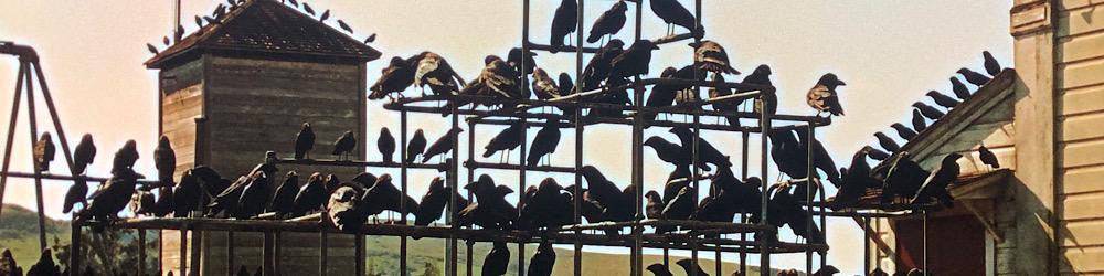 The-Birds-3.jpg