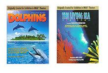 dolphins living sea