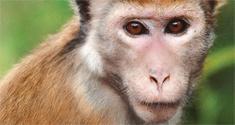 monkey kingdom news