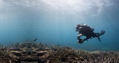 chasing coral news