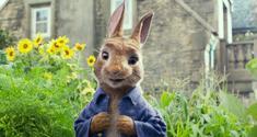 peter rabbit news