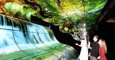LG OLED Falls